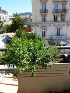 menthe du balcon de maman, plantée By Lola